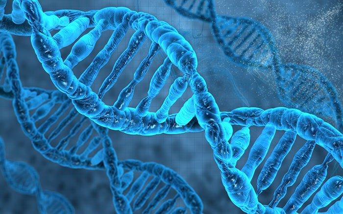 Worin besteht der Unterschied zwischen DNA und DNS?