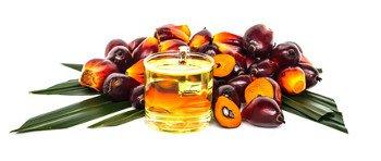 Palmöl - Effizient, aber schädlich für Mensch und Natur?