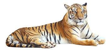 Die Rodung der Regenwälder ist gleichbedeutend mit Artensterben