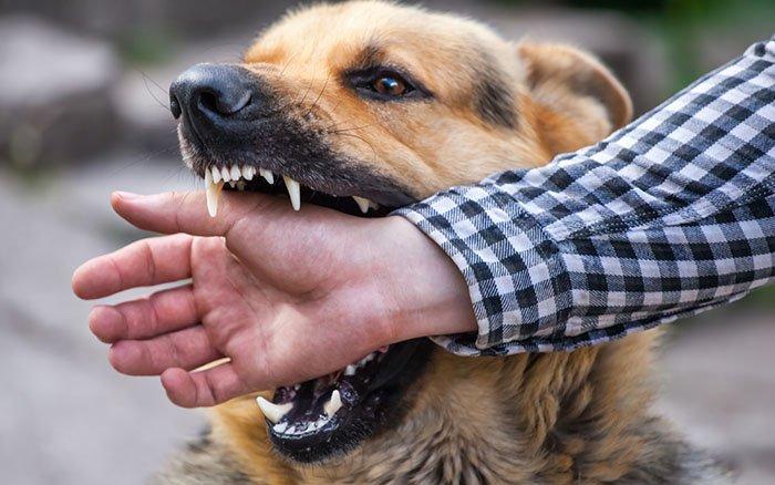 Vom Hund gebissen: So solltest Du jetzt reagieren!